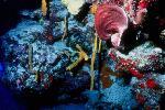 vie ocean P 3 2172 JPG