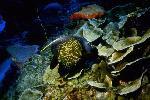 vie ocean P 3 2178 JPG