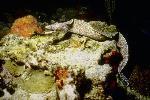 vie ocean P 3 2181 JPG