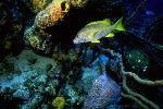 vie ocean P 3 2185 JPG