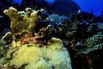 vie ocean P 3 2189 JPG