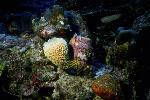 vie ocean P 3 22 6 JPG