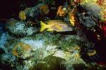 vie ocean P 3 2213 JPG