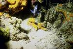 vie ocean P 3 2214 JPG