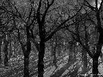 3d Paysage 3dpaysages15mars83 1 24 jpg