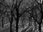 3d Paysage 3dpaysages15mars83 8  jpg