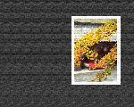 estampes automne aki1 1 128 jpg