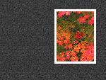 estampes automne aki3 4 1 24 jpg