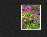 estampes fleur hana1 7 128 jpg