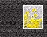 estampes fleur hana1 1 128 jpg