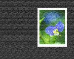 estampes fleur hana6 9 128 jpg
