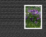 estampes fleur hana8 3 128 jpg