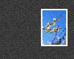 estampes fleur hana9 4 128 jpg
