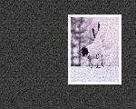 estampes hiver winter1 7 128 jpg
