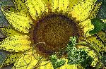 juice dessin 3619 JuiceDrop jpg