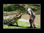 Steve Irwin Steve Irwin  1 jpg
