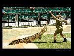 Steve Irwin Steve Irwin  6 jpg