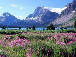 canada Bow Lake Canadian Rockies Alberta jpg
