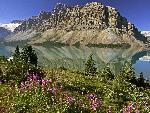 canada Bow Lake and Flowers Banff National Park Alberta Canada jpg