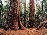 arbre arbres 1 jpg