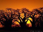 arbre arbres 4 jpg