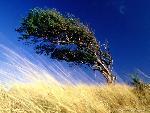 arbre arbres 7 jpg