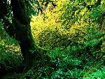 arbre arbres 16 jpg