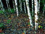 arbre arbres 17 jpg