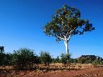 arbre arbres 2 jpg
