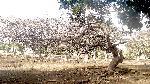 arbre tree 68 jpg