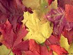 automne autumn 1 jpg