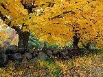 automne autumn 11 jpg