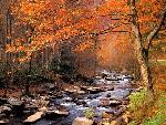 automne autumn 12 jpg