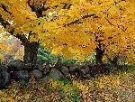 automne autumn 13 jpg