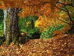 automne autumn 14 jpg