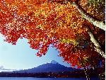 automne autumn 16 jpg