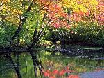 automne autumn 18 jpg