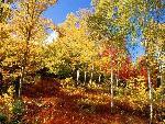 automne autumn 22 jpg