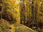 automne autumn 25 jpg