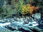 automne autumn 26 jpg