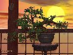 bonsai bonsai 6 jpg