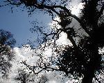 ciel skies 22 jpg