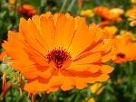 fleurs flower 29 jpg