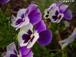 fleurs flower 4 jpg