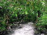 foret forest   jpg