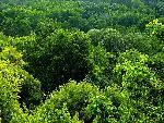 foret forest 11 jpg