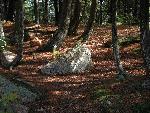 foret forest 12 jpg