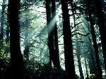 foret forests  2 jpg