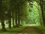 foret forests  3 jpg