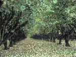 foret forests  7 jpg
